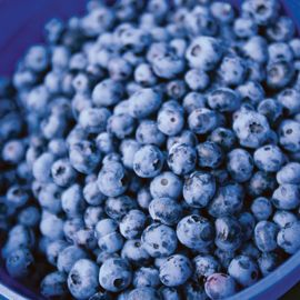 Northblue Blueberry