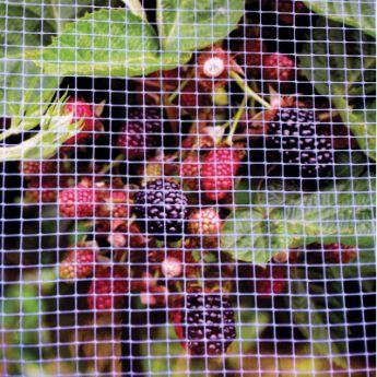 Garden Netting Garden Netting For Sale from Stark Bros