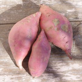 Photo of Georgia Jet Sweet Potato