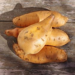 Photo of Vardaman Sweet Potato