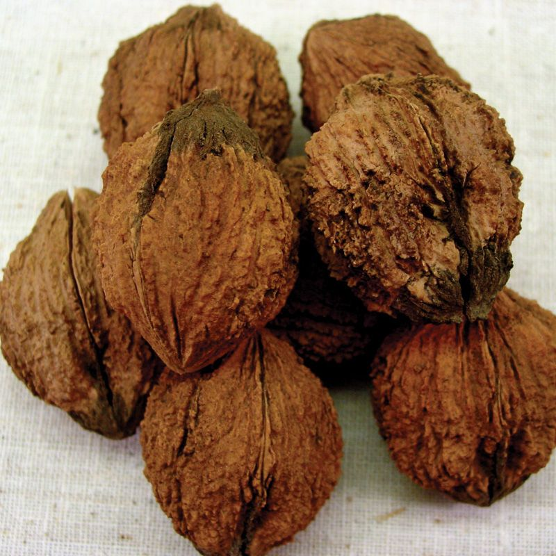 Walnut Trees From Stark Bros Walnut Trees For Sale