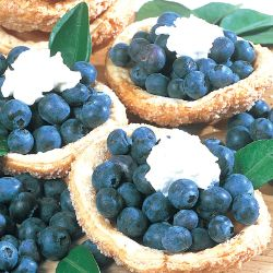 Blueberry Shortcake Collection