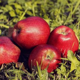 Photo of Red Delicious Apple