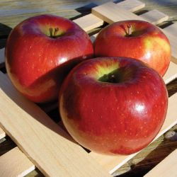 Photo of Stark® BraeStar™ Apple