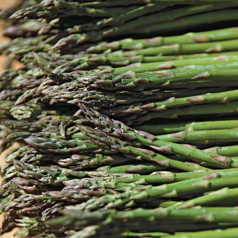 Baby asparagus foliage