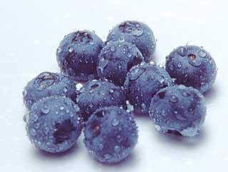 Northblue Blueberry