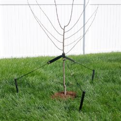 DeWitt Tree Stake Kit