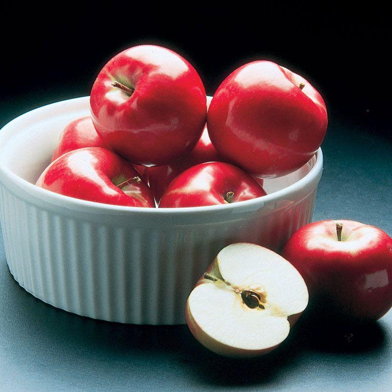 Cortland Apple Apple Trees Stark Bro S