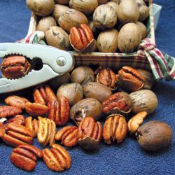Starking® Southern Giant Pecan