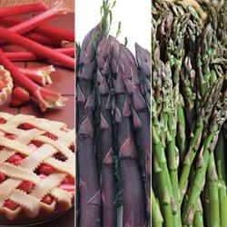 Asparagus & Rhubarb Plant Assortment