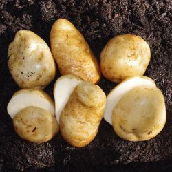 Heirloom Seed Potato Collection
