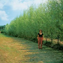 Photo of Stark® Hybrid Willow