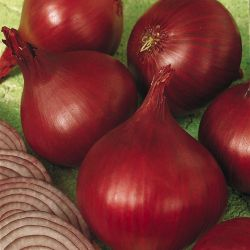 Photo of Redwing Onion