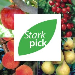 Stark Picks Easy-Care Orchard-In-A-Box®