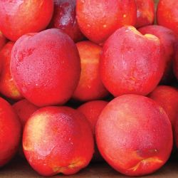 Photo of Stark® SunGlo Nectarine