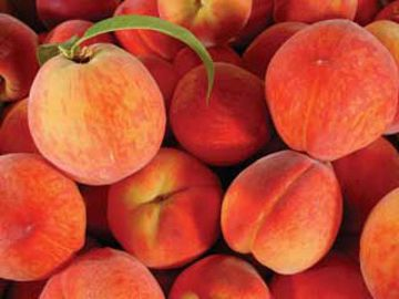 Photo of Garnet Beauty Peach