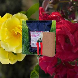 Climbing Rose Gift Assortment