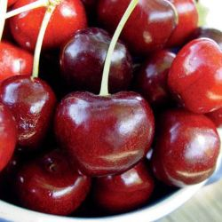 Photo of Starking® Hardy Giant™ Antique Sweet Cherry
