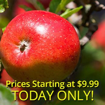 One-Day Apple Tree Sale