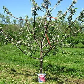 End of Season Fruit Tree Sale