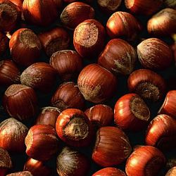Photo of Barcelona Filbert Hazelnut