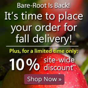 It's time to order for fall delivery. 10% site-wide discount.