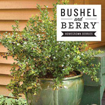 Bushel and Berry™