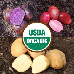 Red, White and Blue Seed Potato Collection