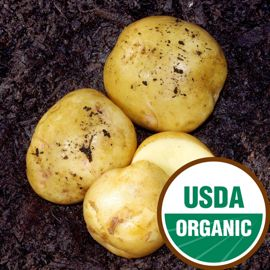 Yukon Gold Seed Potato