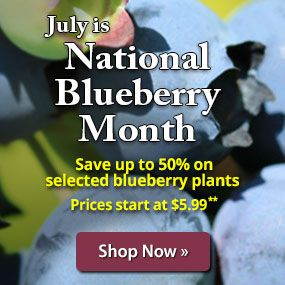 Save up to 50% on selected blueberry plants.