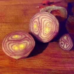 Holland Red Shallot