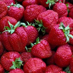 Photo of Surecrop Strawberry