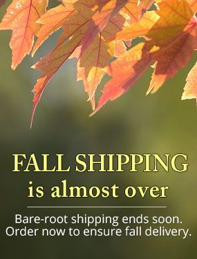 Bare-root shipping ends soon. Order now to ensure fall delivery.