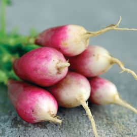 French Breakfast Radish Seed