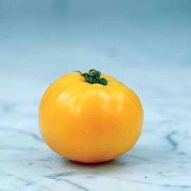 Barnes Mountain Yellow Tomato Seed
