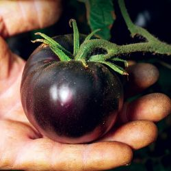 Black Beauty Tomato Seed
