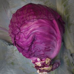 Mammoth Red Rock Cabbage Seed