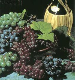 Vintner's Grape Vine Collection