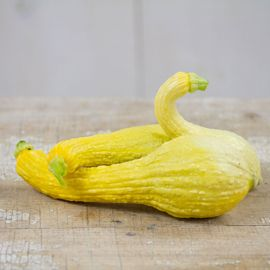 Early Summer Golden Crookneck Squash Seed