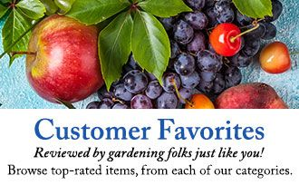 Browse top-rated items, from each of our categories.