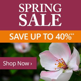 Spring Sale - Save up to 40%