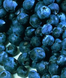 Ozarkblue Blueberry
