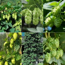Connoisseur's Hops Collection