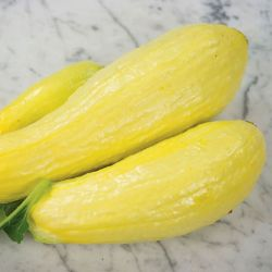 Early Prolific Straightneck Squash Seed