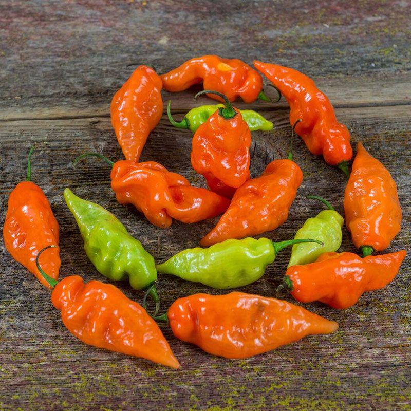 200 Peach Habanero Pepper Seeds BULK SEEDS