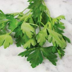 Giant of Italy Parsley Seed