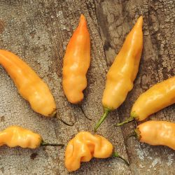 Sugar Rush Peach Hot Pepper Seed