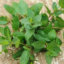 Marvelous Mix Mint Seed