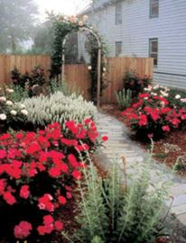 Knock Out® Rose Garden