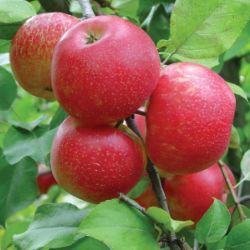 Quarter-Acre Orchard-In-A-Box®